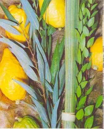 четыре вида растений на Суккот
